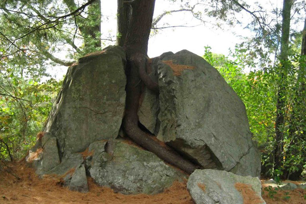 Rock-Split-By-Tree